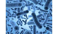 Free Webinar - Diagnosis and Prevention of Clostridium Difficile Infection (CDI)