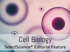 9-steps-to-better-cell-biology---special-feature