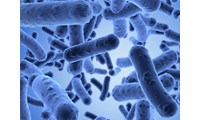 Unraveling the mysteries of antibiotic persistence