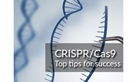 Achieve knockout success with these 5 top tips from the CRISPR/Cas9 experts