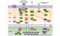 Cancer Pathway Compendium: Downloadable Content for Your Lab