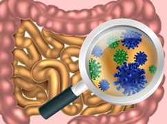 how-gut-microbes-control-our-health-latest-news,-methods-and-interviews