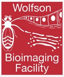 my-lab-essentials-dr-mark-jepson-from-the-wolfson-bioimaging-facility