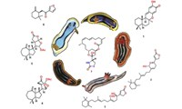 Finding New Drugs - Resolving the Molecular Secrets of Metabolism in Marine Molluscs