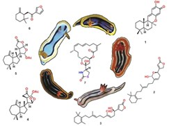 finding-new-drugs---resolving-the-molecular-secrets-of-metabolism-in-marine-molluscs