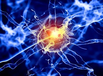 neurological-regenerative-medicine--unlocking-the-potential-of-stem-cells-in-the-olfactory-system