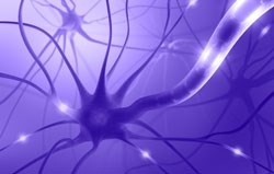 dont-miss-the-latest-neuroscience-applications-on-selectscience
