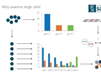 acoustic-dispensing-for-high-throughput-single-cell-sequencing-workflows