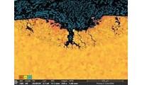 SEM: Explore the microscopic world in color