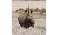 DNA Database Putting Rhino Poachers Behind Bars