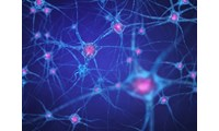 Alzheimer's Disease: Amyloid β Protein Once Again in The Spotlight as a Therapeutic Target