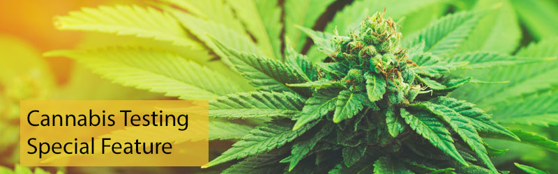 Cannabis Testing SelectScience special feature 2020