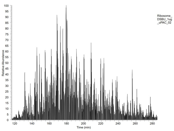 Region of chromatogram of cross-linked E. coli ribosome, 1µg; 2m-µPAC™ column, 240-min gradient