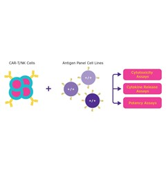 Immuno-Oncology Cell lines by Sigma-Aldrich®