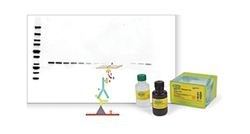 Immunodetection Reagents and Kits by Bio-Rad product image