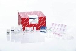 AllPrep DNA/RNA FFPE Kit (50) by QIAGEN