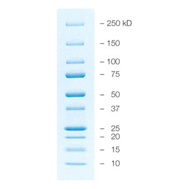 Precision Plus Protein™ All Blue Prestained Protein Standards by Bio-Rad thumbnail