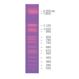 CHEF DNA Size Marker #1703605 by Bio-Rad thumbnail