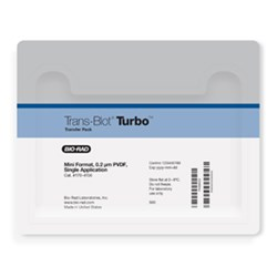 Trans-Blot® Turbo™ Mini PVDF Transfer Packs by Bio-Rad product image