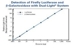 Dual-Light<sup>®</sup> Combined Reporter Gene Assay System for Detection of Luciferase and beta-Galactosidase