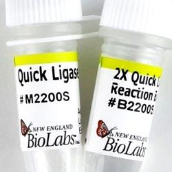 Quick Ligation™ Kit