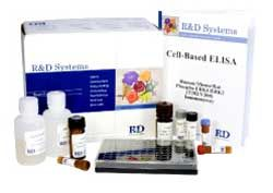 Cell-based ELISA by R&D Systems, Inc. thumbnail
