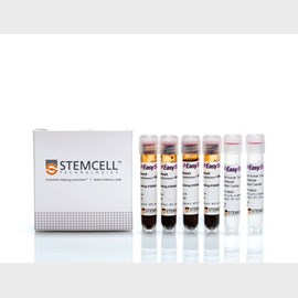 EasySep™ Direct Human Total Lymphocyte Isolation Kit by STEMCELL Technologies Inc. product image