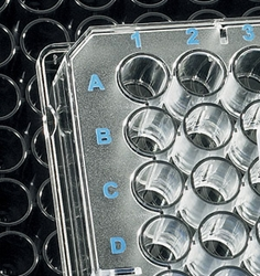 BRANDplates immunoGrade, hydroGrade™ and lipoGrade™ Immunoassay Microplates by BrandTech® Scientific, Inc. thumbnail