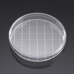 BD BioCoat Laminin 150 mm Culture Dishes by BD Biosciences Discovery Labware thumbnail
