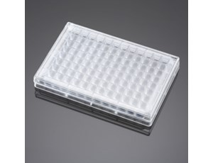 BD Falcon 96-Square Well, Angled Bottom Plate and Lid