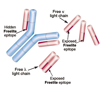 freelite serum free light chain assays from binding site. Black Bedroom Furniture Sets. Home Design Ideas