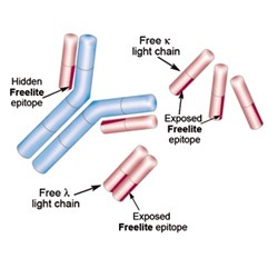 Freelite® Serum Free Light Chain Assays by Binding Site product image