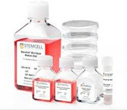 NeuroCult® Neural Colony-Forming Cell Assay Kit (Mouse) by STEMCELL Technologies Inc. product image