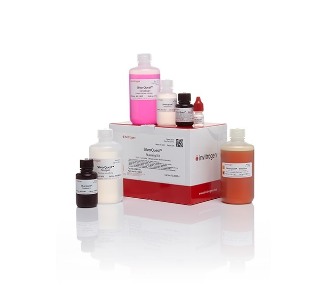 SilverQuest™ Silver Staining Kit by Thermo Fisher Scientific thumbnail