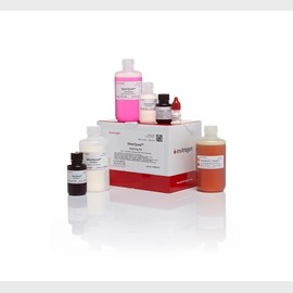 SilverQuest™ Silver Staining Kit by Thermo Fisher Scientific product image