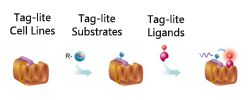 GPCR ligand binding with Tag-lite technology by Cisbio Bioassays thumbnail