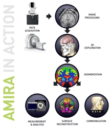 Amira 3D Analysis Software by FEI Company thumbnail