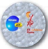HitHunter™ Kinase Binding Assays for Unactive Kinases by DiscoveRx Corporation product image