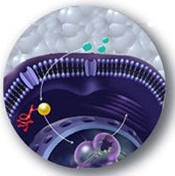PathHunter™ Cell Cycle Assays by DiscoveRx Corporation thumbnail