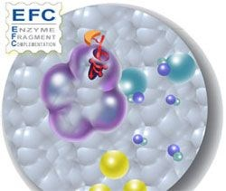 Custom EFC Assays by DiscoveRx Corporation product image
