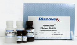 PathHunter™ EAstern Blot Assay Kit by DiscoveRx Corporation thumbnail