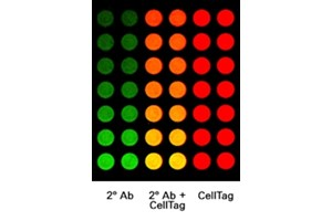 CellTag™ 700 Stain In-Cell Western™ Kits