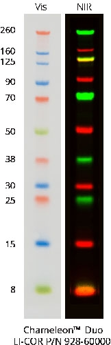Chameleon<sup>®</sup> Duo Pre-stained Protein Ladder by LI-COR Biosciences thumbnail