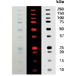 Odyssey® Protein Molecular Weight Marker (10-250 kDa), 0.5 mL by LI-COR Biosciences thumbnail