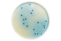 m-FC Agar by MilliporeSigma, a business of Merck KGaA Darmstadt Germany product image