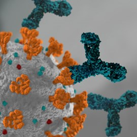SARS-CoV-2 Antibody Assays by Siemens Healthineers product image
