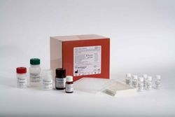 NGAL Rapid ELISA Kit by BioPorto Diagnostics A/S product image