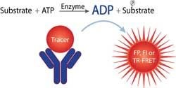 Transcreener® ADP2  Assay