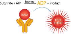 Transcreener® ADP² Kinase Assays by BellBrook Labs thumbnail