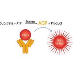 Transcreener® ADP² Kinase Assays